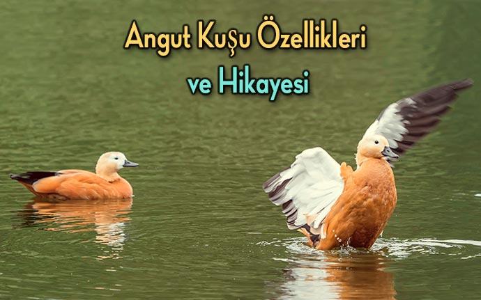 angut-kuşu-hikayesi